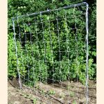 5 foot by 5 foot Square Trellis with 6 inch mesh